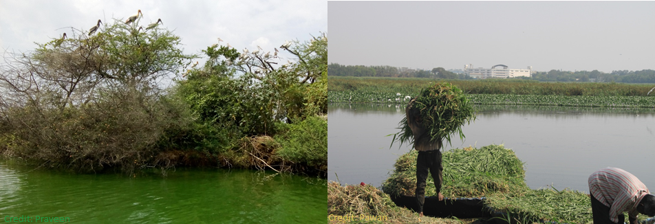 Developing Citizen-Relevant Water Quality Criteria for Urban Lakes in Bengaluru