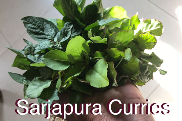 Sarjapura Curries