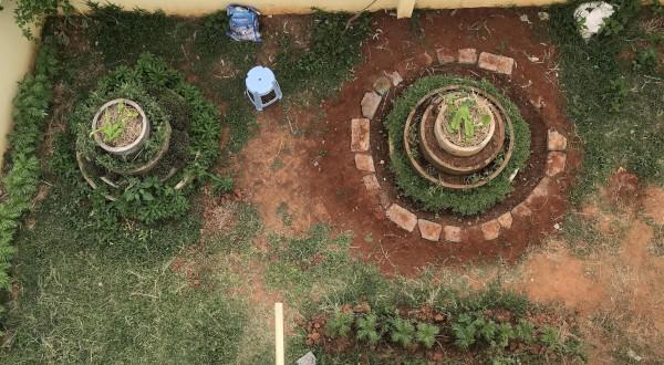 Sarjapura Curries: Bringing back edible weeds