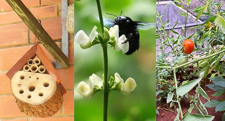 The Bee Garden Project