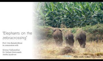 Elephant on the Zebra Crossing
